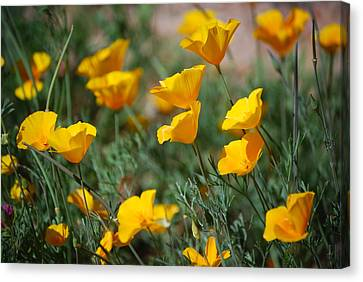 Canvas Print featuring the photograph Poppies by Tam Ryan
