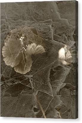 Poppies Under Ice Canvas Print