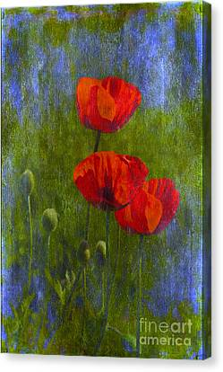 Poppies Canvas Print by Veikko Suikkanen
