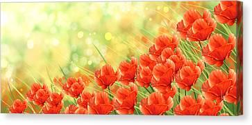 Poppies Canvas Print by Veronica Minozzi