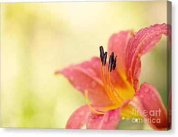 Popping Fresh Canvas Print by Beve Brown-Clark Photography