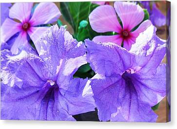 Popping Purple Petals Beauty Canvas Print by Belinda Lee