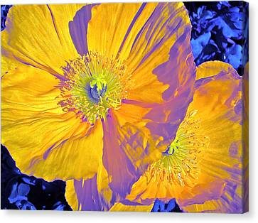 Poppy 14 Canvas Print