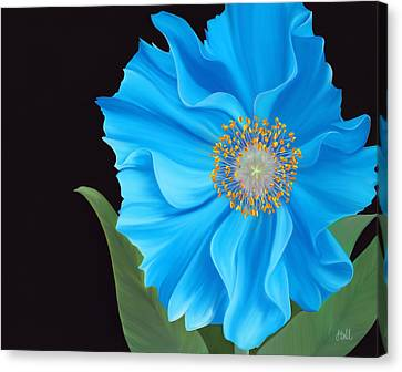 Poppy 2 Canvas Print by Laura Bell
