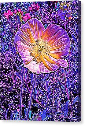Canvas Print featuring the photograph Poppy 3 by Pamela Cooper