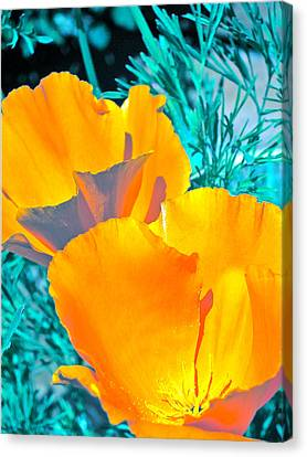 Canvas Print featuring the photograph Poppy 4 by Pamela Cooper