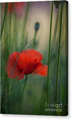 Poppy Abstract Canvas Print by Mike Reid