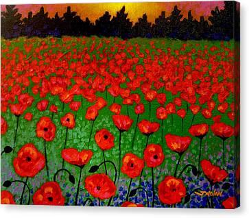 Poppy Carpet  Canvas Print by John  Nolan