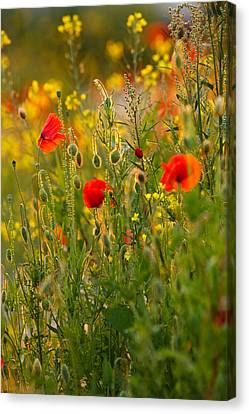 Concern Canvas Print - Poppy Delight  by Roeselien Raimond