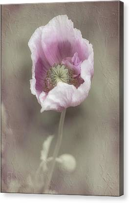 Poppy Canvas Print by Elaine Teague