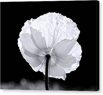 Poppy Canvas Print by Elizabeth Budd