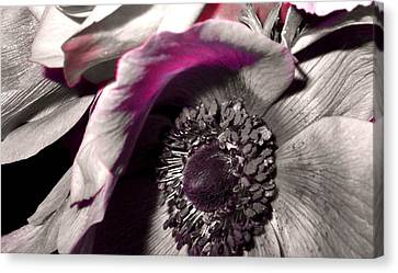 Poppy Eye Canvas Print by Sharon Costa