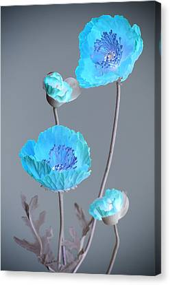 Poppy Family Canvas Print