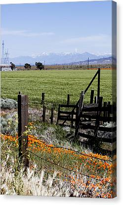 Canvas Print featuring the photograph Poppy Fences by Ivete Basso Photography
