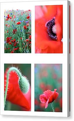 Poppy Field 1 Canvas Print by AR Annahita