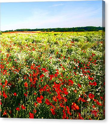 Poppy Field In Summer Canvas Print