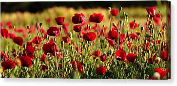 Canvas Print featuring the photograph Poppy Fields Forever by Uri Baruch