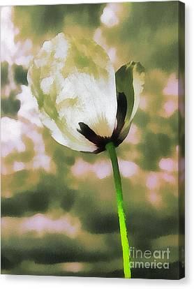 Poppy Flower In The Sky  Canvas Print by Odon Czintos