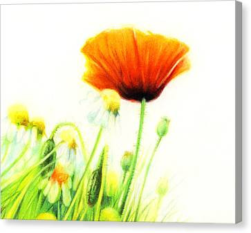 Canvas Print featuring the drawing Poppy Flower by Natasha Denger