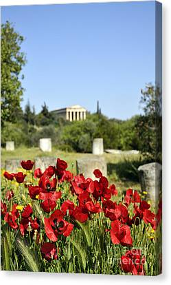 Poppy Flowers In Ancient Market Canvas Print by George Atsametakis