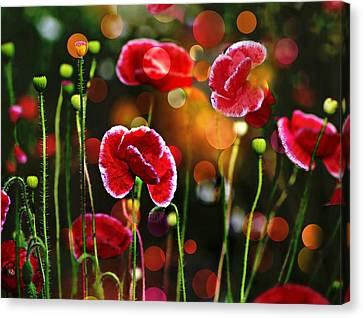 Poppy Gala 2 Canvas Print by Shirley Sirois