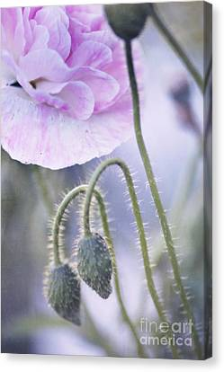 Poppy Garden Canvas Print by Priska Wettstein