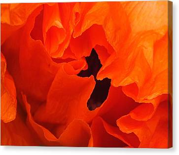 Canvas Print featuring the photograph Poppy by Gene Cyr