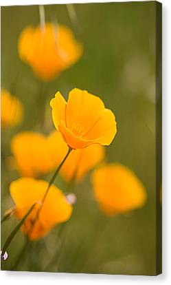 Canvas Print featuring the photograph Poppy I by Ronda Kimbrow