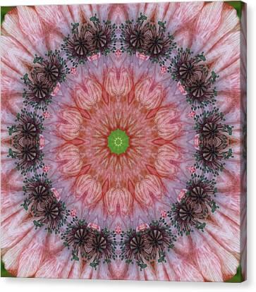 Poppy In My Garden Canvas Print by Trina Stephenson