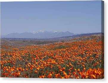 Canvas Print featuring the photograph Poppy Land by Ivete Basso Photography