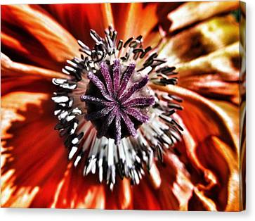 Poppy - Macro Fine Art Photography Canvas Print