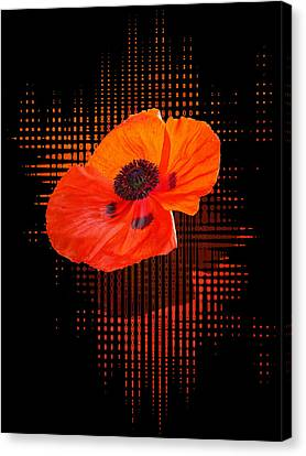 Poppy Passion Canvas Print by Gill Billington