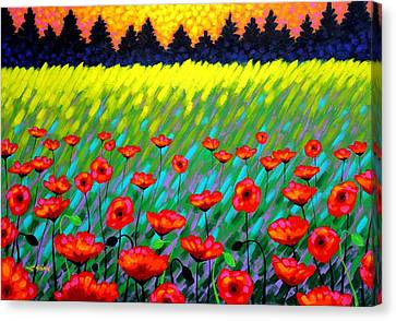 Poppy Scape Canvas Print by John  Nolan