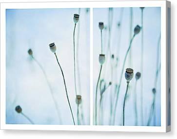 Poppy Seed Pods Canvas Print by Theresa Tahara