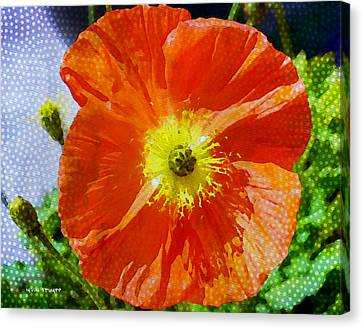 Poppy Series - Opened To The Sun Canvas Print by Moon Stumpp