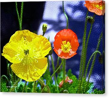 Poppy Series - Soaking Up Sunbeams Canvas Print by Moon Stumpp