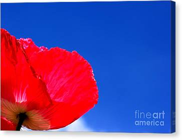 Poppy Sky Canvas Print by Stephen Melia