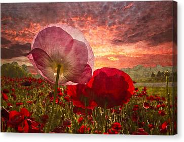 Poppy Sunrise Canvas Print by Debra and Dave Vanderlaan