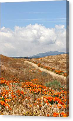 Poppy Trail Canvas Print by Art Block Collections