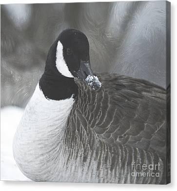 Portait Of A Goose Canvas Print