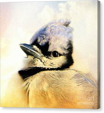 Portrait Of A Blue Jay Canvas Print
