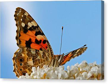 Portrait Of A Butterfly Canvas Print