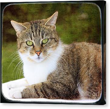 Portrait Of A Cat Canvas Print by Angela Bruno