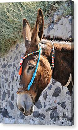 Portrait Of A Donkey Canvas Print