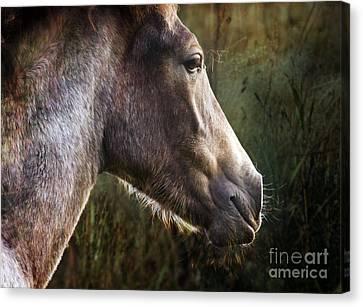 Portrait Of A Dreaming Horse Canvas Print by Angel Ciesniarska