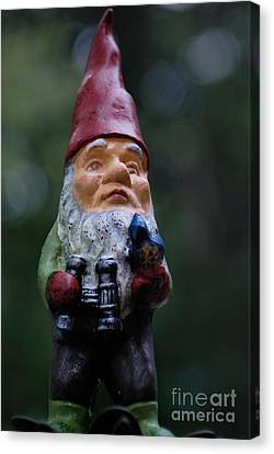 Portrait Of A Garden Gnome Canvas Print by Amy Cicconi