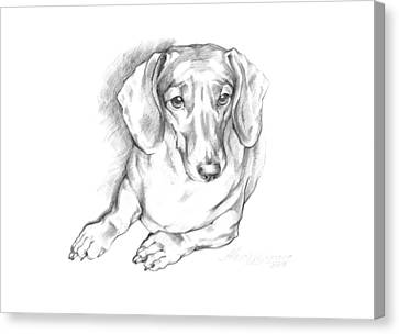Portrait Of A Laying Dachshund Canvas Print
