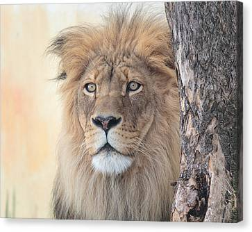 Portrait Of A Lion Canvas Print by Everet Regal