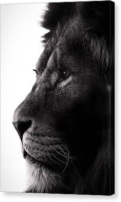Portrait Of A Lion Canvas Print by Martin Newman