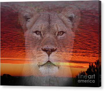 Portrait Of A Lioness At The End Of A Day Canvas Print by Jim Fitzpatrick